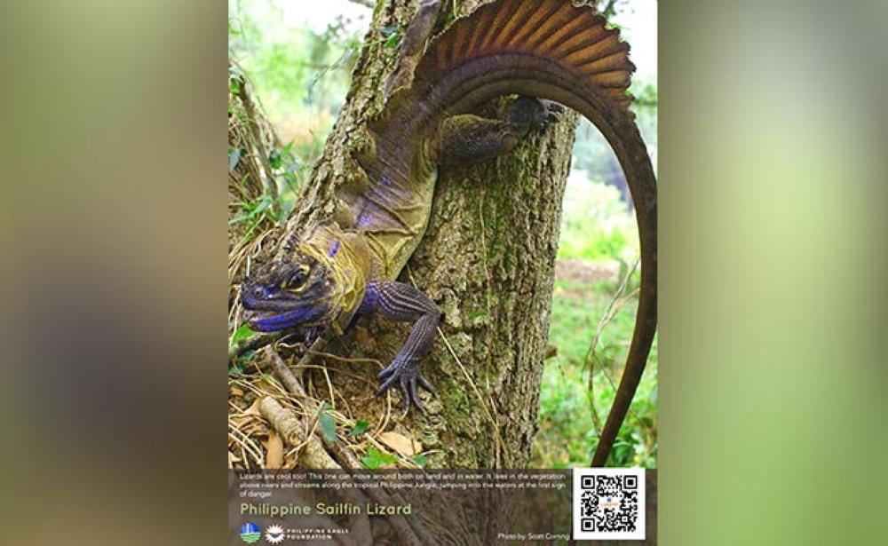 Wildlife interactive exhibit 2
