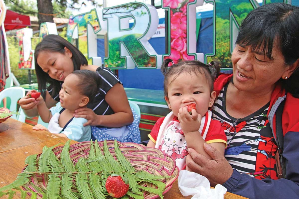 LA TRINIDAD. Children feast on fresh strawberries during the strawberry eating contest in La Trinidad, Benguet as part of the Strawberry Festival. (Milo Brioso)