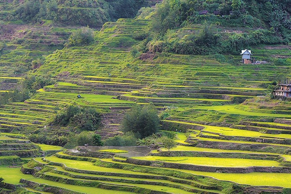 CONTINOUS RESTORATION. The ongoing rehabilitation and restoration of the stone-walled Banaue Rice Terraces continue as part of the corporate social responsibility program of a private firm. (Milo Brioso)