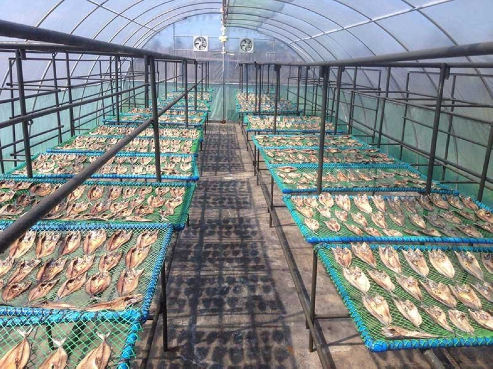 Cadiz City's dried fish plant is located at the city's reclamation area. (Contributed photo)
