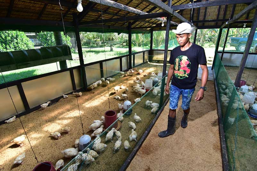 DAVAO. A young farmer in Aces Nature Farm, Panabo is seen checking on their chickens.