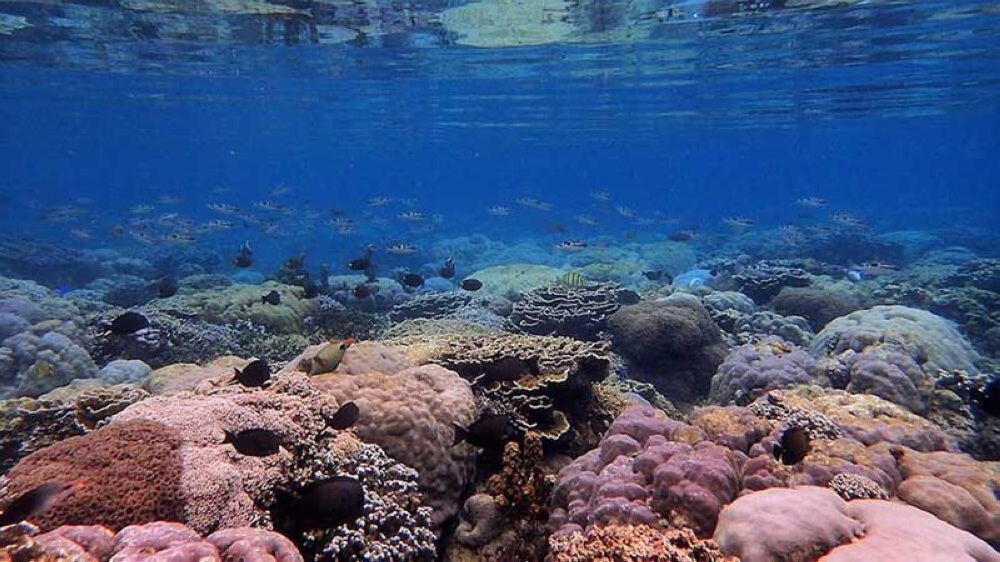 Danjugan shallow coral reef's biodiversity is considered outstanding, but the story behind its sustainable tourism, and environmental education programs make the destination even more meaningful. <b>(Kaila Ledesma Trebol)</b>