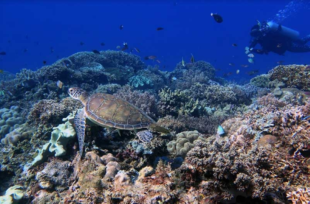 A sea turtle enjoys a healthy coral reef at Danjugan Island marine reserve and wildlife sanctuary in Cauayan, Negros Occidental. The Month of the Ocean celebrates marine ecosystems and biodiversity, engaging communities to keep them healthy as our food, air and livelihood depend on them. (Contributed Photo)