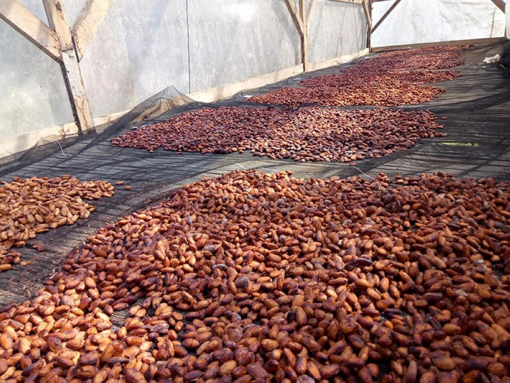 Their products are processed from their very own cacao bean harvest in their plantation in New Carmen, Davao City. (Capt. Du Facebook)
