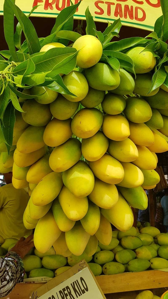 The matchless sweetness of Guimaras mangoes