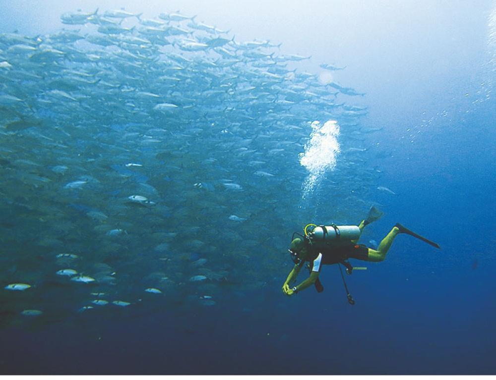 LUSH. A diver is dwarfed by a school of jacks off Apo Island off the southeastern tip of Negros Island. (Stella A. Estremera)