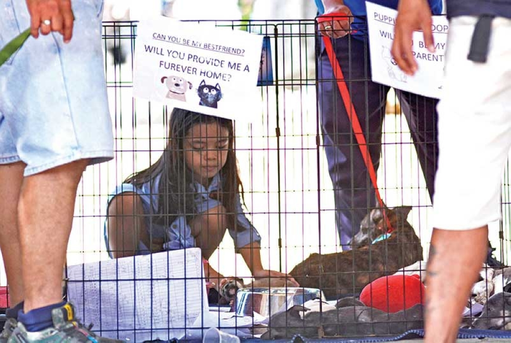 REHOMING. A young girl pets one of the many dogs who needed new homes after being rescued from the streets by the Department of Veterinary Medicine and Fisheries. (SunStar photo / Amper Campaña)