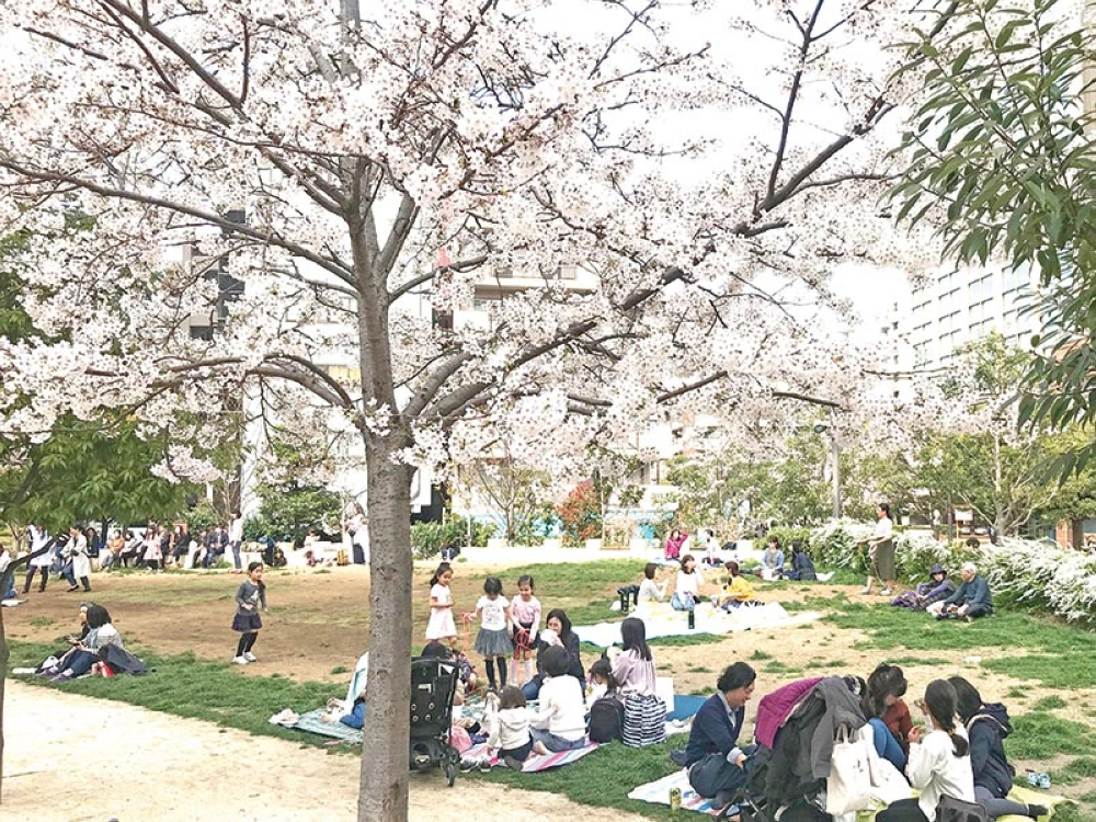 Hanami, a tradition in Japan. (Contributed photo)