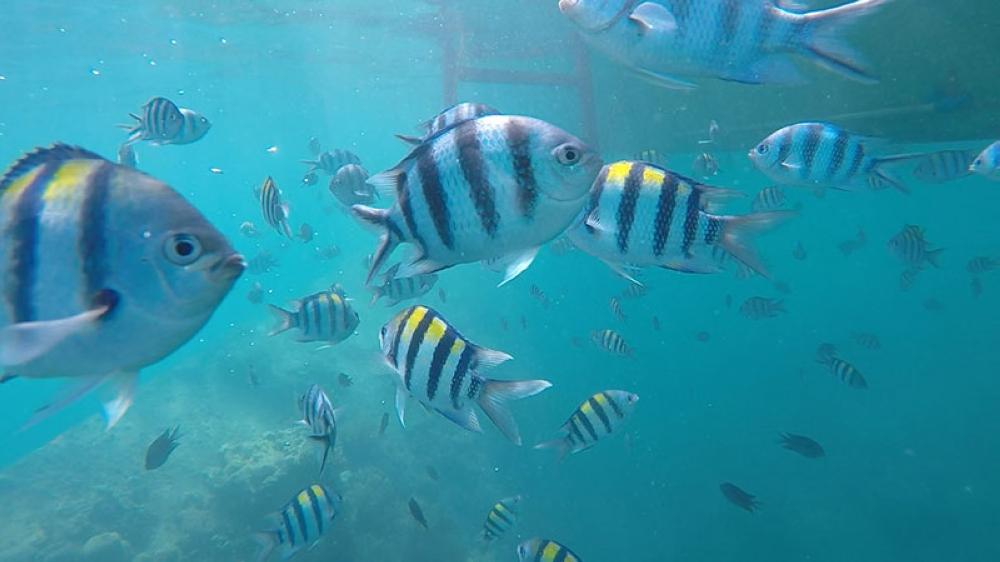 Schools of fish frolicking near Lusong Gunboat (Kathleen Pastrana)