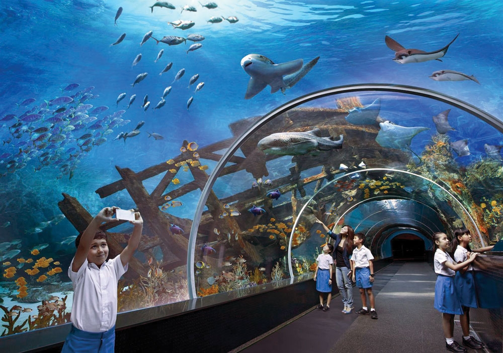 At the shark seas, visitors will find nurse sharks, black-tipped reef sharks, grey reef sharks and the endangered hammerhead shark. (Contributed Foto)