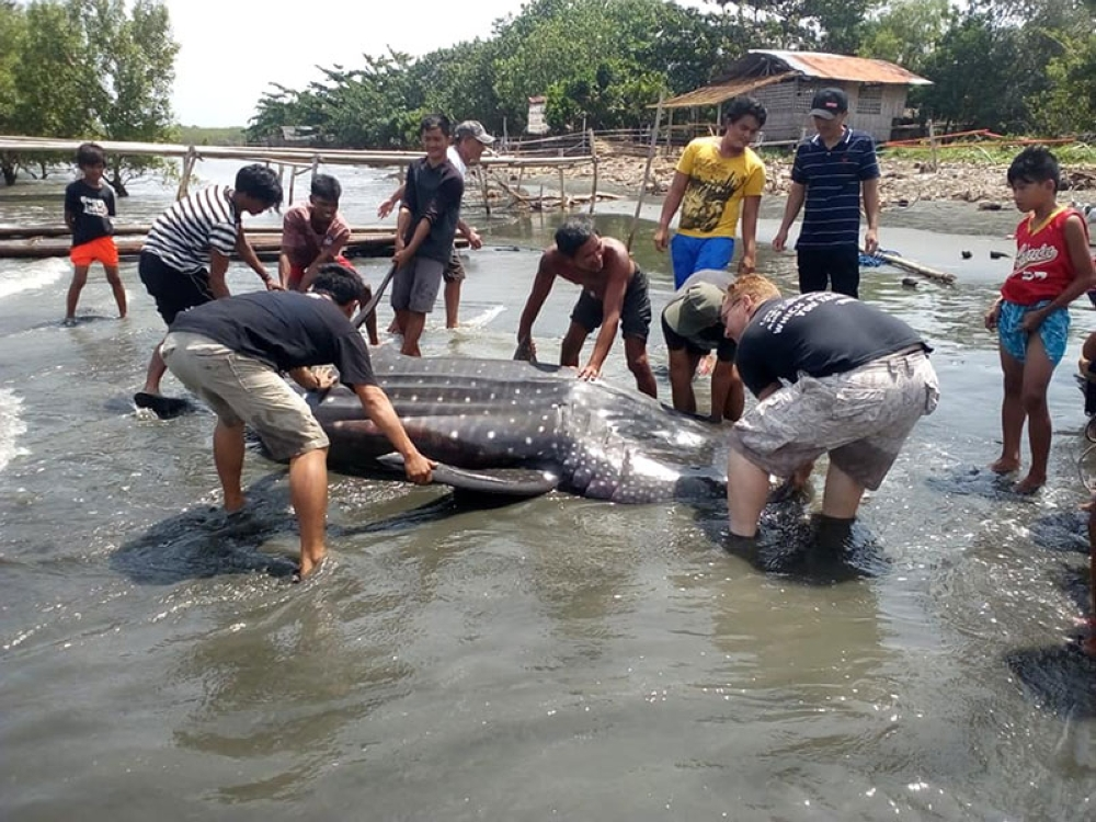 DAVAO. A dead whale shark was spotted at the shoreline in Barangay Cabugan, Tagum City, Davao del Norte Tuesday dawn, August 7, 2018. (Photo by Darell Blatchley)