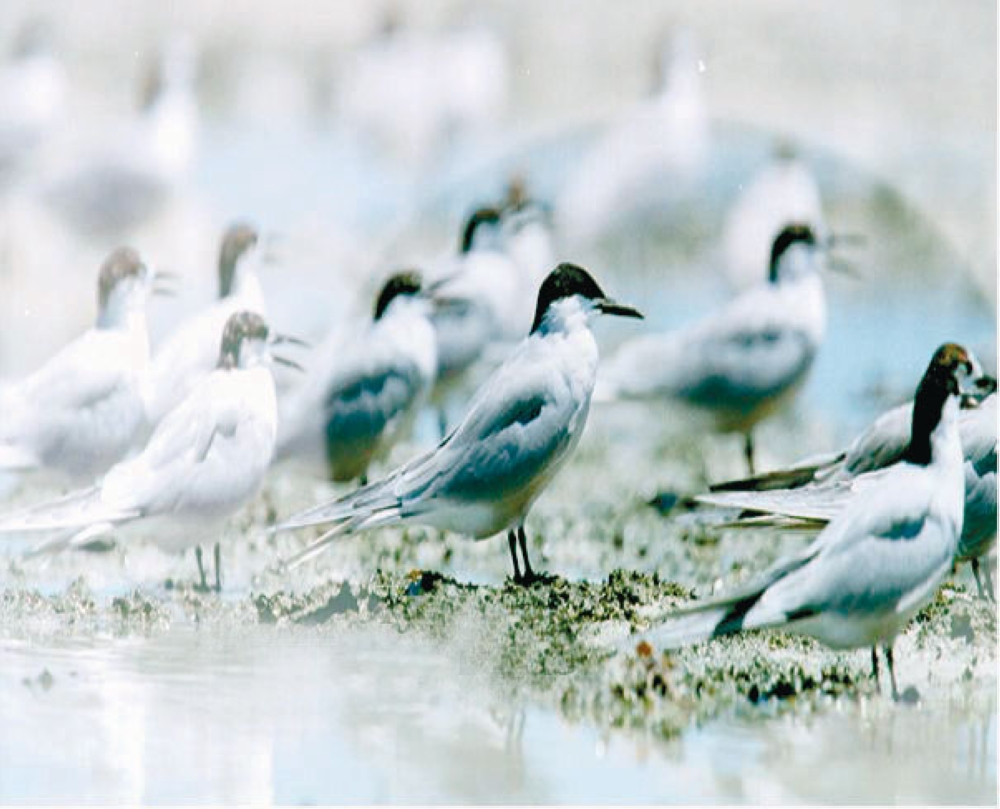 Bird watching. Bird watching enthusiasts flock to Olango Island to get the chance to see migratory birds. (SunStar File)