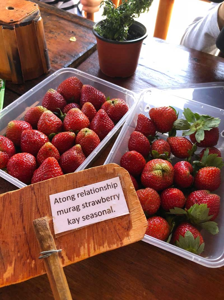 BUKIDNON. Super sweet strawberries. There's strawberry picking this September. Check their FB page-Cafe Sa Bukid-for details. (Hannah Victoria Wabe)