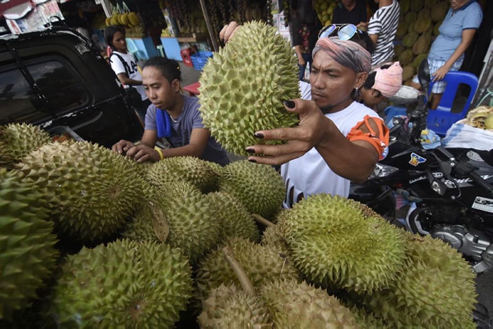 DAVAO. Duha ka tindero sa Durian sa Magsaysay Park Fruit Vendors Association nag-diskarga sa mga bag-ong abot nga Durian gikan sa Calinan Davao City. Midagsang ang durian ug mapalit nalang sa tag P70 ang kilo labi na nga gibuksan na ang week long celebration sa Kadayawan Festival. (Mark Perandos)