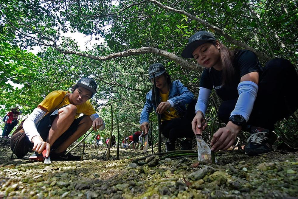 DAVAO. Misalmot ang pipila ka mga empleyado sa SunStar Davao Inc., sa gipahigayon nga Trees Brew Life nga aktibidad sa San Miguel Brewery Inc. niadtong adlaw'ng Sabado, Agosto 11, didto sa Sitio Talaw, Tuban, Sta. Cruz, Davao del Sur. Mokabat 2,500 ka similya sa Bakawan ang dungan nga gipananom aron mapreserba ang kanindot sa baybayon sa maong lugar. (Mark Perandos)