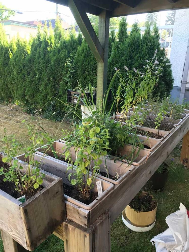 How To Start A Small Herb Garden Sunstar