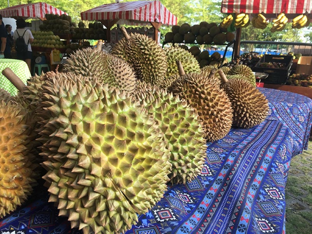 DAVAO. After being in the hundreds in the previous weeks, the price of durian is expected to lower to P50 per kilogram (kg) by the end of August. This is still much higher than the P20/kg that was recorded in 2015. (Gilford A. Doquila)