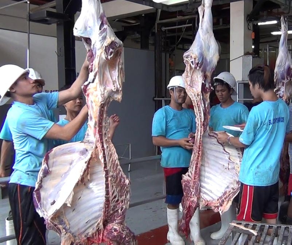 ZAMBOANGA. The Filipino-Turkish Tolerance School on Tuesday, August 21, slaughtered 87 cattle. The beef will be distributed to the less fortunate people in celebration of the Feast of Sacrifice, or Eid'l Adha. (Photo by Bong Garcia)