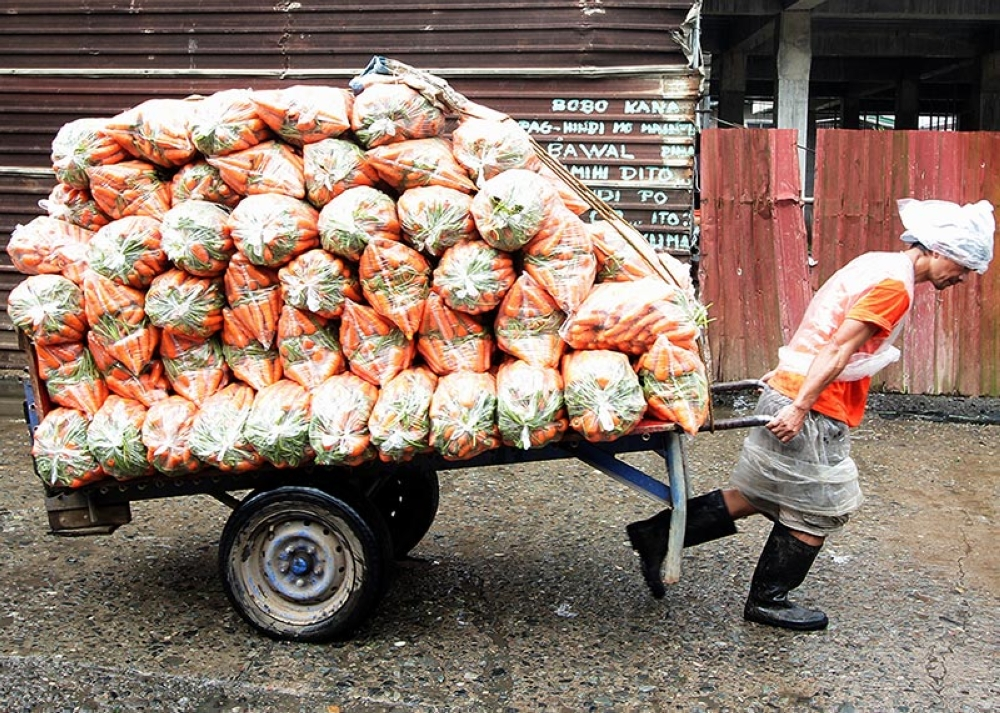 THE REAL CARROT MAN. A porter in La Trinidad, Benguet transports carrots to loading bays at the trading post as supply of vegetable remain stable despite the constant rains in the highland. (Jean Cortes)