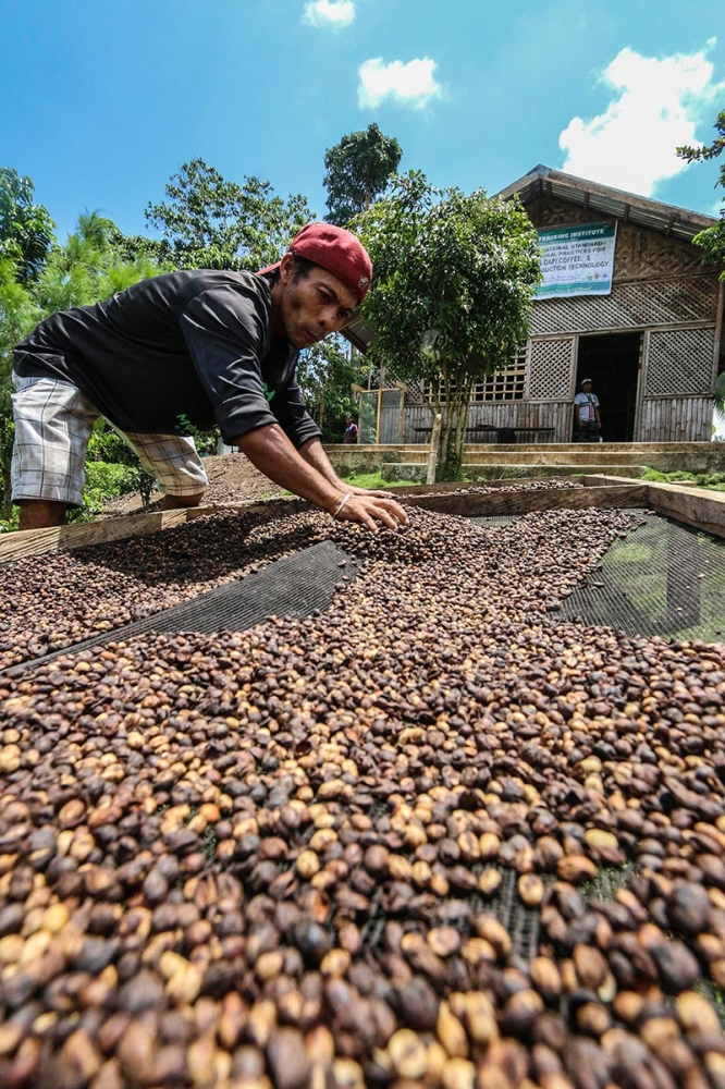 SORTING. A farmer in Tuburan town sorts coffee beans. The town was one of six beneficiaries of the DOST's Community Empowerment through Science and Technology program. (SunStar file)