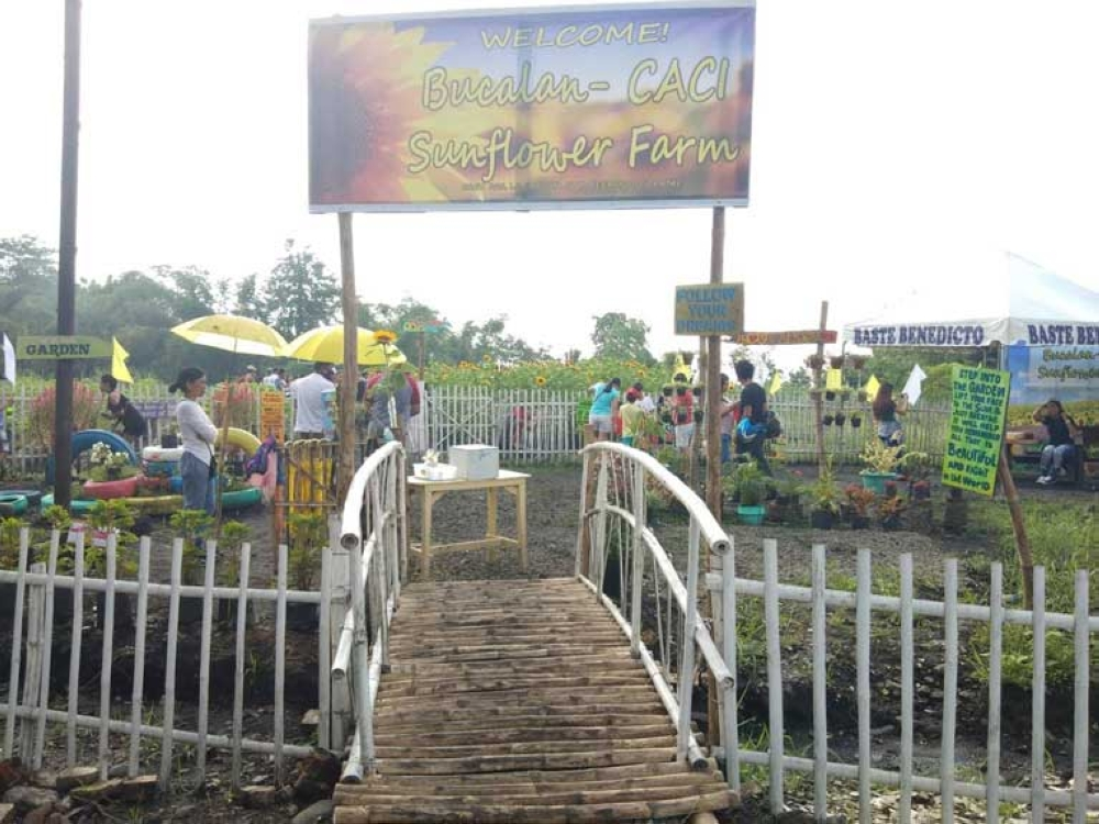 The entrance to the Bucalan-Caci Sunflower Farm (Contributed Photo)