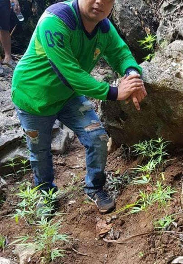 CEBU. More than 1,000 marijuana plants in Barangay Tagbao were eradicated by the CCPO. (Contributed photo by CCPO)