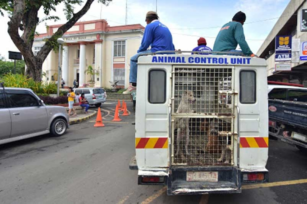 DAVAO. Most of the unclaimed impounded dogs were euthanized are stray dogs. (SunStar Davao File Photo)