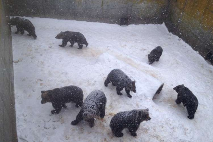 Noboribetsu Bear Ranch  (Photo /  Melanie Lim)
