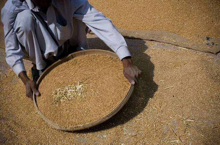 PAKISTAN. In this May 5, 2008 file photo, a Pakistani laborer sieves the wheat during the wheat harvest on the outskirt of Lahore, Pakistan. (AP)