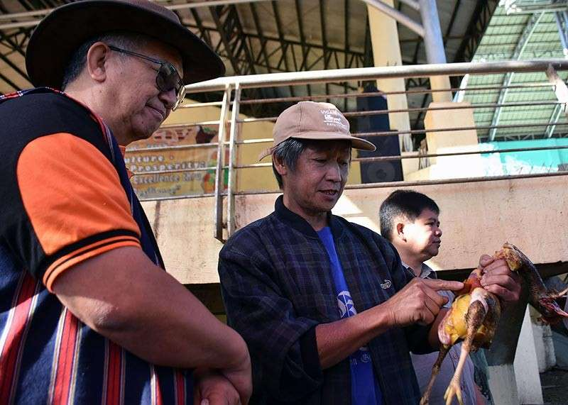 BENGUET. The 118th Benguet Founding Anniversary celebration and the Adivay Festival 2018 culminate with indigenous rituals in lieu of the recent tragedy that happened to the province in the past months. Benguet elder Simeon Marciano shows the chicken used for the ritual to Governor Crescencio Pacalso. (Redjie Melvic Cawis)