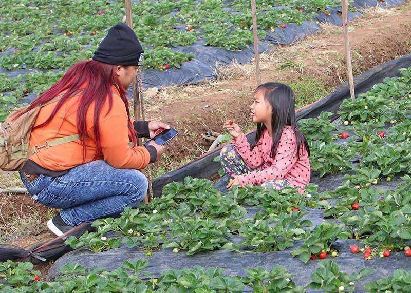 LA TRINIDAD. A mother and child tourists enjoy their strawberry picking at La Trinidad. Despite the recent typhoons, Strawberry picking starts in the valley in time for the possible influx of tourists this coming holiday season. (SunStar Baguio photo)