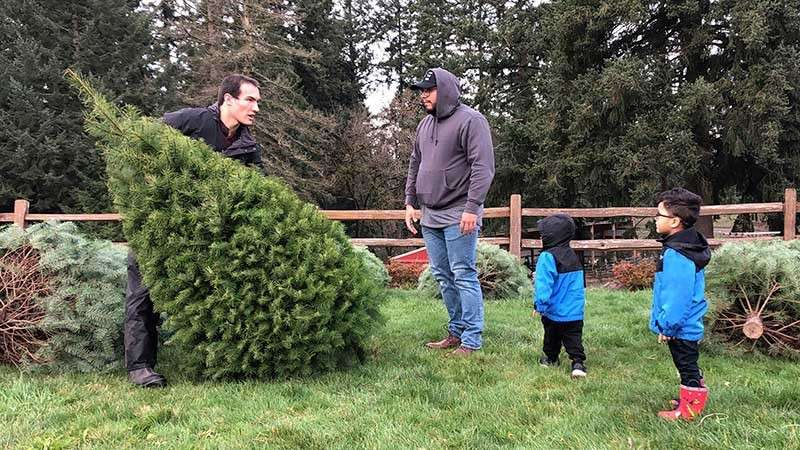 OREGON. In this Thursday, Nov. 29, 2018, photo, Tommy Lee, a sixth-generation tree farmer at Lee Farms in Tualatin, Ore., helps Jason Jimenez and his sons carry the Douglas fir they selected off the tree lot. Christmas tree farmers in America are paying a fee to the Christmas Tree Promotion Board for each tree harvested to fund a social media ad campaign aimed at convincing young families to buy real trees instead of artificial ones. (AP)