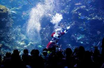 USA. Volunteer diver George Bell, dressed as Santa Claus, waves to visitors to the Philippine Coral Reef tank at The California Academy of Sciences in San Francisco, Thursday, December 13, 2018. (AP)