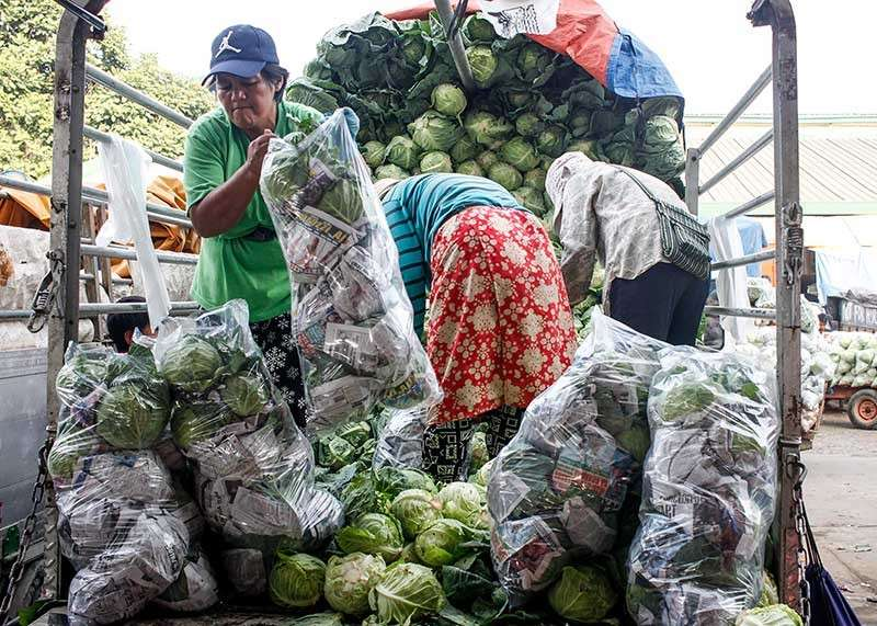 BENGUET. A middle-aged woman carries loads of cabbages as traders from all over the country flock to the vegetable trading post in La Trinidad for the holidays. (Photo by Jean Nicole Cortes)