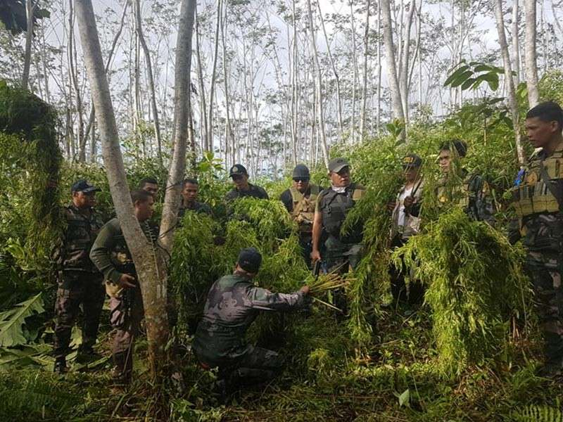 AGUSAN DEL SUR. A total of 1,000 marijuana plants weighing 61 kilograms amounting to P3.35 million were uprooted and burned in Sitio Kalampayan, Barangay Kasapa 2, La Paz, Agusan del Sur, Monday, January 7. (Photo courtesy of PRO-13)