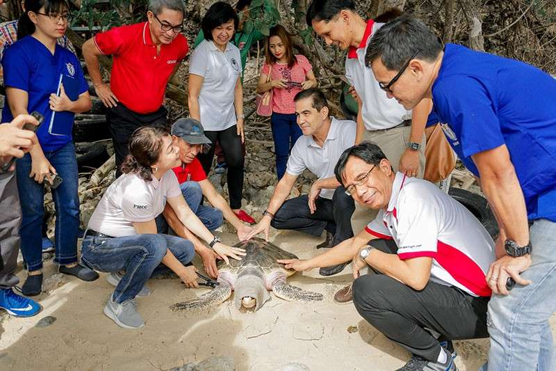 DAVAO. AboitizPower Executive Vice President and Chief Operating Officer (COO) for Distribution Group Jim Aboitiz (center, kneeling), leads the release of a hawksbill turtle (pawikan) on the grounds of the Aboitiz Cleanergy Park in Punta Dumalag, Davao City where a Pawikan Center (rescue and hatchery facility) is set to rise. He is joined by DENR Assistant Secretary Ruth Tawantawan (left, kneeling) and Davao Light COO Rodger Velasco (right, kneeling) while Aboitiz Equity Ventures adviser for Mindanao Art Milan (2nd from left, standing) and Davao Light Community Relations Manager Fermin Edillon (2nd from right, standing) look on. (Contributed Photo)
