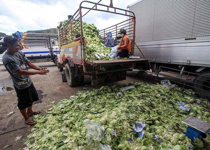 BAGUIO. Farmers peel off worn out leaves of cabbages at the Benguet Agri-Pinoy Trading Center (BAPTC). Unsold crops are taken back to their farms due to oversupply and lack of buyers. (Jean Nicole Cortes)