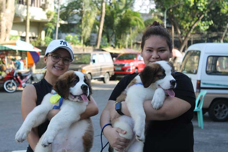 PVO has been pushing for massive dog vaccination and responsible pet ownership to lessen, if not eliminate, positive rabies cases in Negros Occidental. (Contributed Photo)
