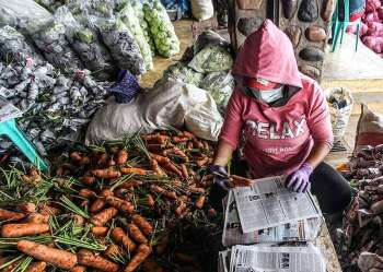 BAGUIO. Packers at the Benguet Agri-Pinoy Trading Center packs carrots before they are transported outside Benguet. The Department of Agriculture in the Cordillera region said in a bid to prevent the oversupply of vegetables, information sharing in the different municipalities should also be done. (Photo by Jean Nicole Cortes)