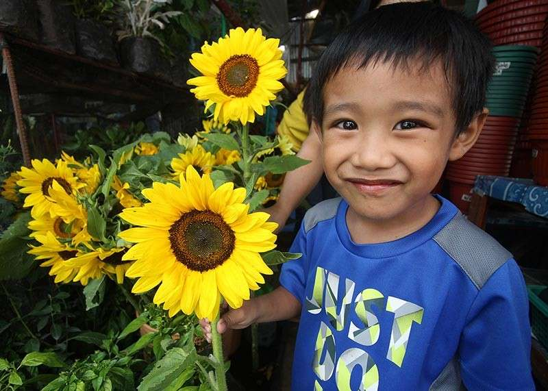 BENGUET. The child of a flower vendor happily showcases a huge sunflower sold at KM.5 in La Trinidad, Benguet. Each stem of sunflower is sold for P15-P20. (Photo by Jean Nicole Cortes)