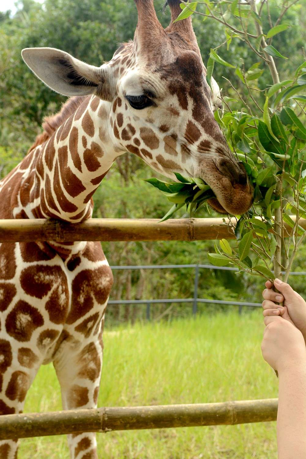 OTHER THINGS TO SEE. Aside from Cebu's famous beaches, tourists looking for other experiences can also take a trip to Carmen town and be up close with animals at the Cebu Safari and Adventure Park. (SunStar file)