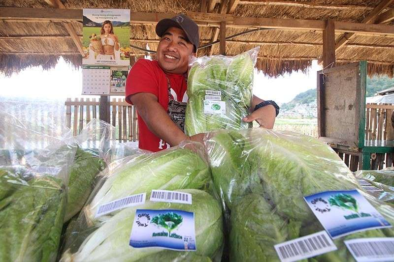 BENGUET. A vegetable vendor shows off his newly harvested crops, packed and sold at the La Trinidad strawberry farm. (Photo by Jean Nicole Cortes)