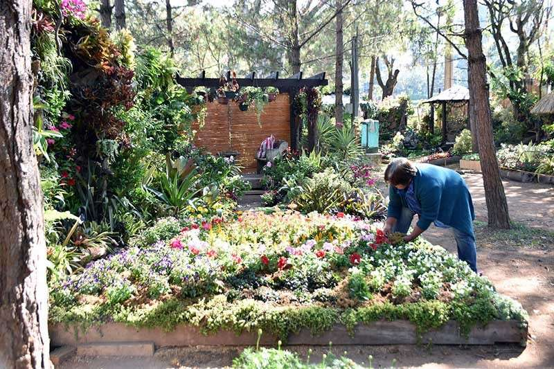 BAGUIO. A gardener completes his landscape in time for the opening of the Baguio Blooms located at the skating rink area as part of the month long Panagbenga Festival. (Redjie Melvic Cawis)