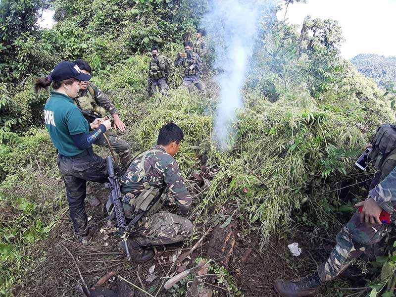 Police and PDEA agents destroyed more than 69,000 hills of marijuana plants in the boundary of Bukidnon and Agusan del Sur. (Photo courtesy of PRO-Caraga)