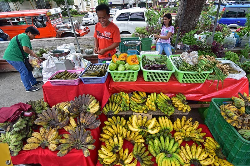DAVAO. The Pilipino Banana Growers and Exporters Association said there is a high demand for saba bananas in the export market. (File photo)