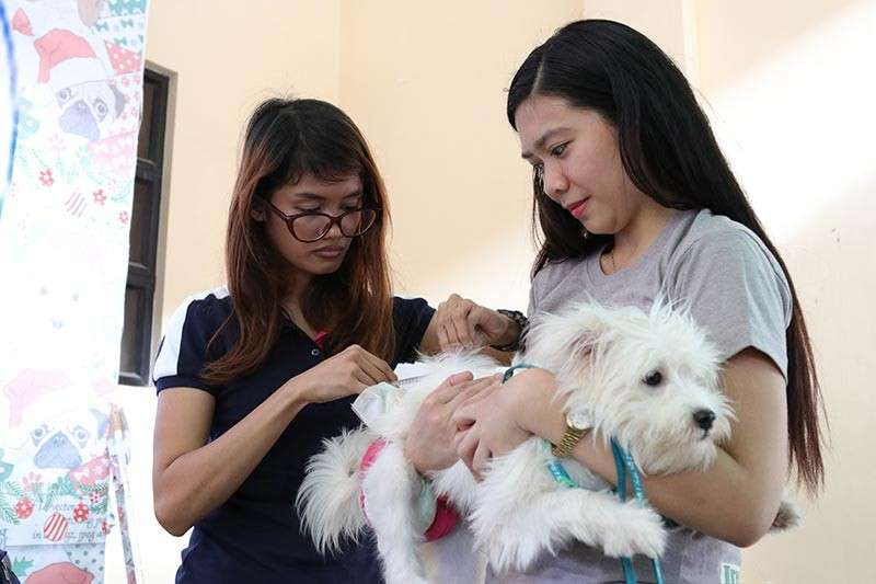 DAVAO. A personnel of City Veterinarian Office (CVO) injects anti-rabies vaccine to a dog brought to their office on Monday, February 11, 2019. The city just had shortage of anti-rabies vaccine for humans, prompting the CVO to ask dog owners to get their pets vaccinated instead. (Mark Perandos)