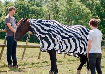 ENGLAND. This undated photo issued by University of Bristol, England, shows a horse wearing a zebra striped coat. Scientists from the University of Bristol and the University of California at Davis, dressed horses in black-and-white Zebra type striped coats for part of their research, offering evidence that zebra stripes provide protection from blood-sucking insects that spread diseases. (AP) onerror=