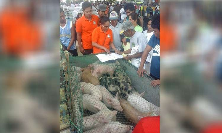 EASTERN SAMAR. Beneficiaries line to receive their piglets as part of the livelihood assistance of the Eastern Samar Provincial Government. (Contributed photo)