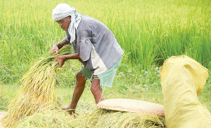 WILL IT HURT FARMERS?: Some farmers oppose the passage of the Rice Tariffication Law saying it will flood the market with cheaper rice abroad but the government assures them they will be protected and assisted with modern farming methods and funding, too. (SunStar file photo)
