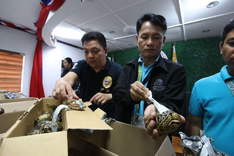 MANILA. Authorities present to media in a press conference the duct-taped turtles that were found stuffed inside luggage at the Ninoy Aquino International Airport. (Al Padilla/SunStar Philippines)